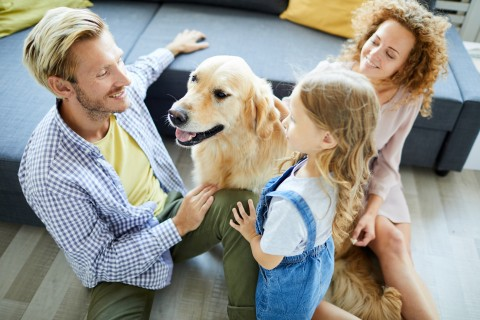 Adding a fur member to the family?  Here are three commonly overlooked concerns.