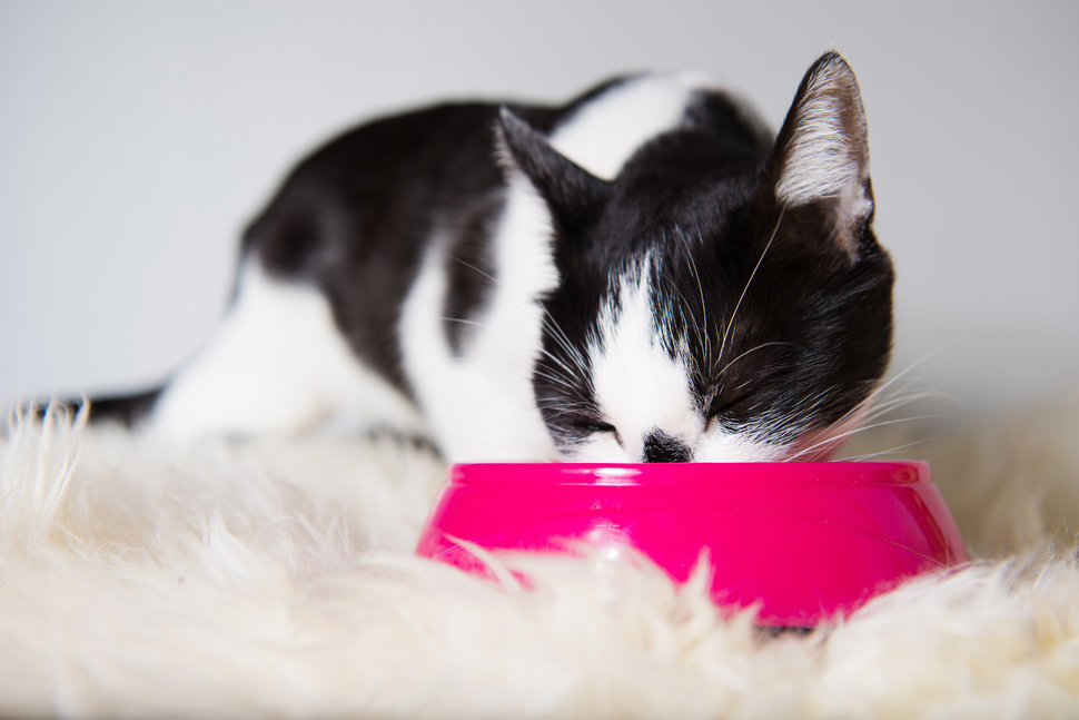 black and white kitten eating from a pink bowl while laying down on a white fur mat